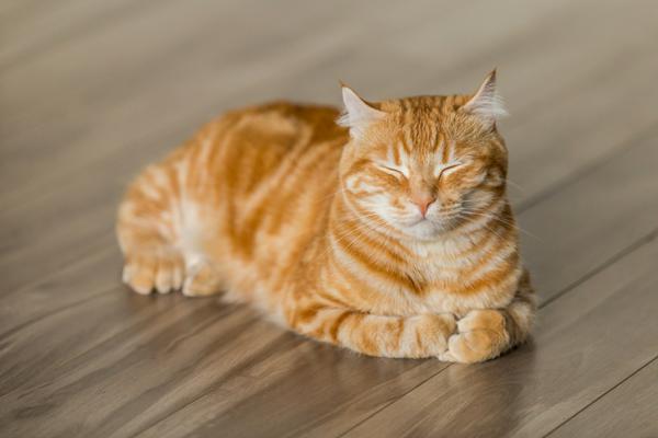 SCIENTIFIQUEMENT PROUVÉ : Les chats nous soignent ! Nourri10