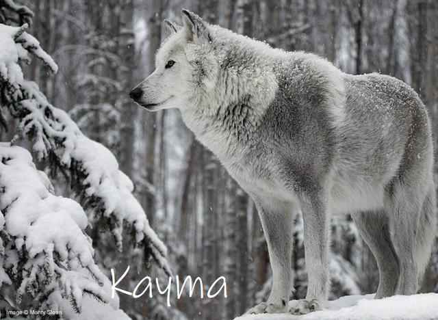 Serafine la solitaire errante  Kayma10
