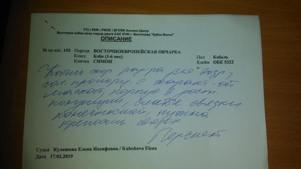 ВОСТОЧНО-ЕВРОПЕЙСКАЯ ОВЧАРКА СИМОН (РКФ) P_201926