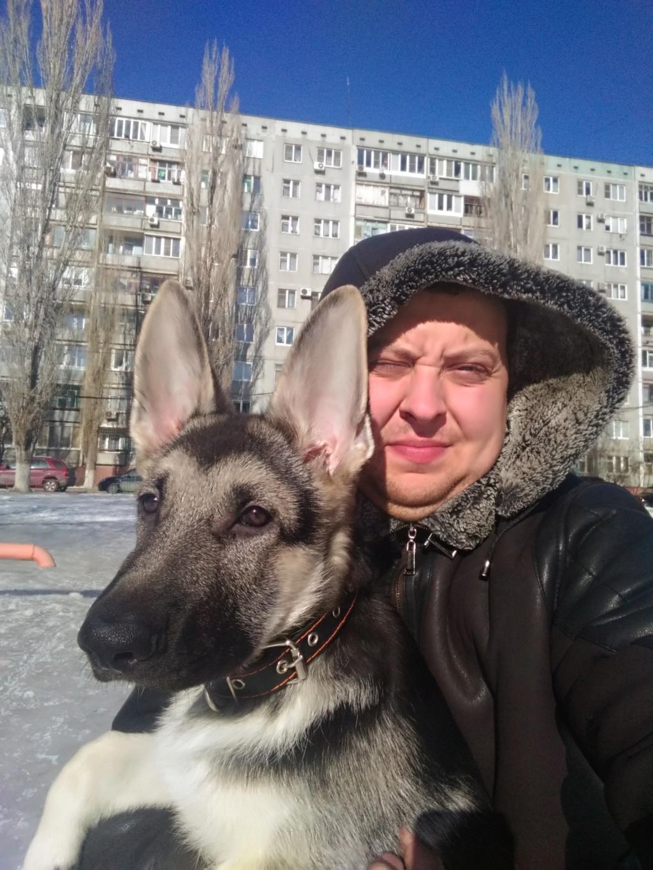 ВОСТОЧНО-ЕВРОПЕЙСКАЯ ОВЧАРКА СИМОН (РКФ) P_201931