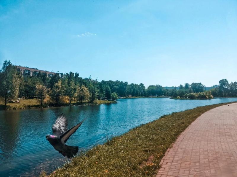 """Природа у ЖК """"Летний сад"""" - Страница 5 4xzrha10"""