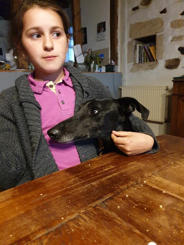 DIEGO galgo noir de 2016 Adopté  Diego110