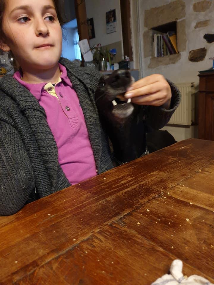 DIEGO galgo noir de 2016 Adopté  Diego111