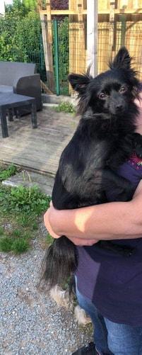 Naia , petite spitz noire , 2ans Adoptée  Naia710