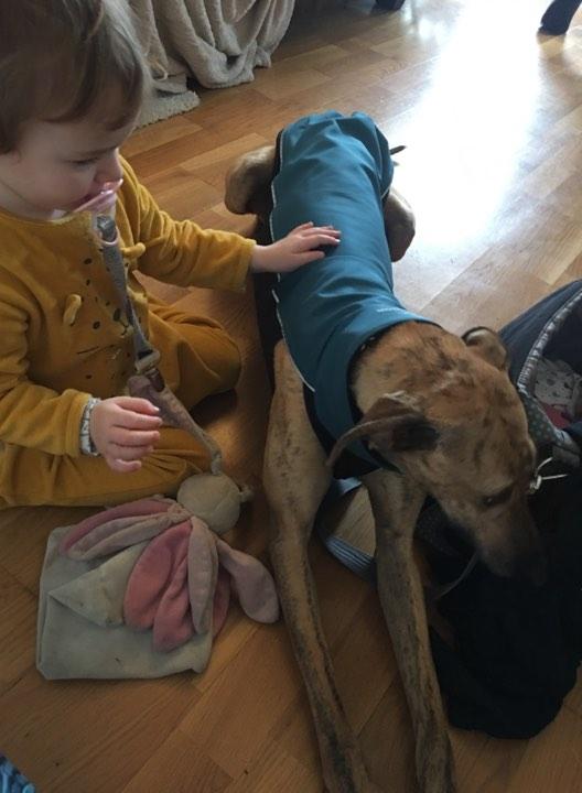 Sacha, galga bringée de 2 ans Adoptée - Page 2 Sacha214