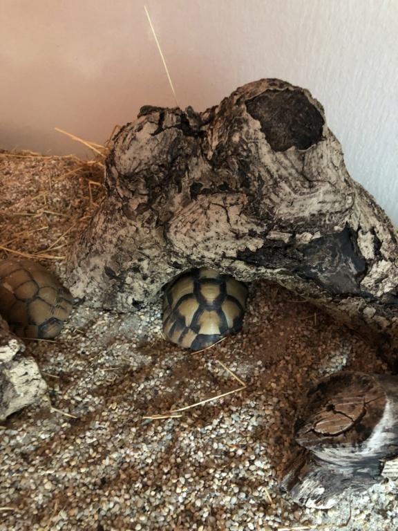 As minhas tartarugas  00b91810