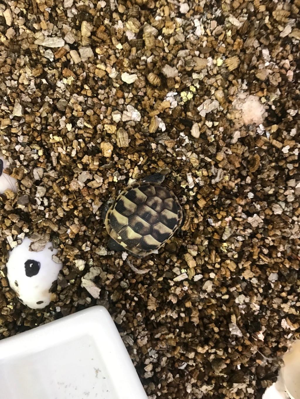As minhas tartarugas  52400910