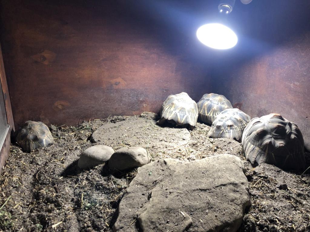 As minhas tartarugas  61960110