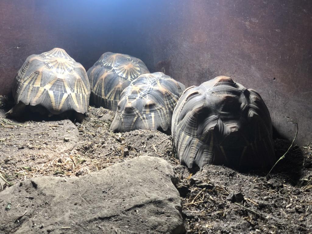 As minhas tartarugas  A67ce910