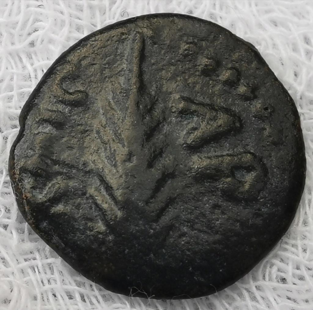 Prutah Porcius Festus (59-62 dC) - Judea Img_2139