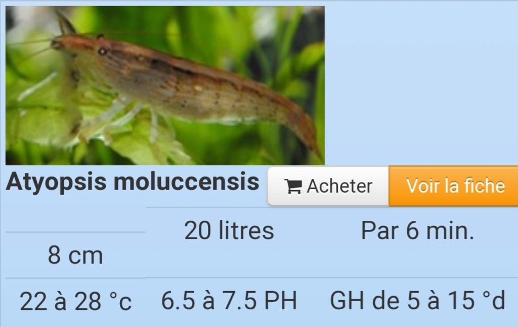 Population 84 litres Screen11