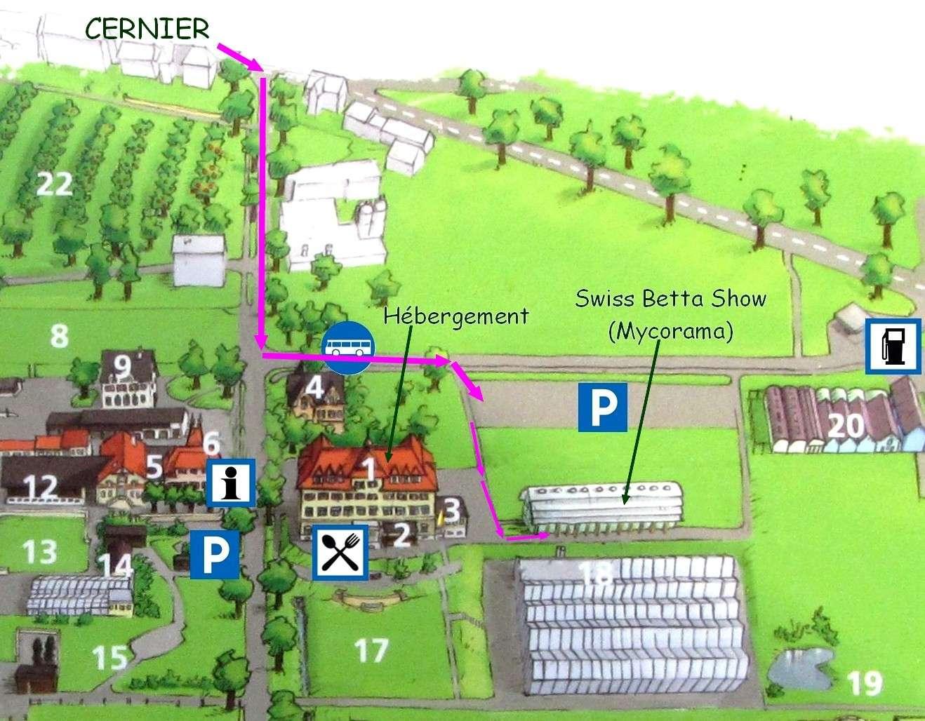 12me Swiss Betta Show: du 31 mai au 2 juin 2013 à Cernier Evolog10