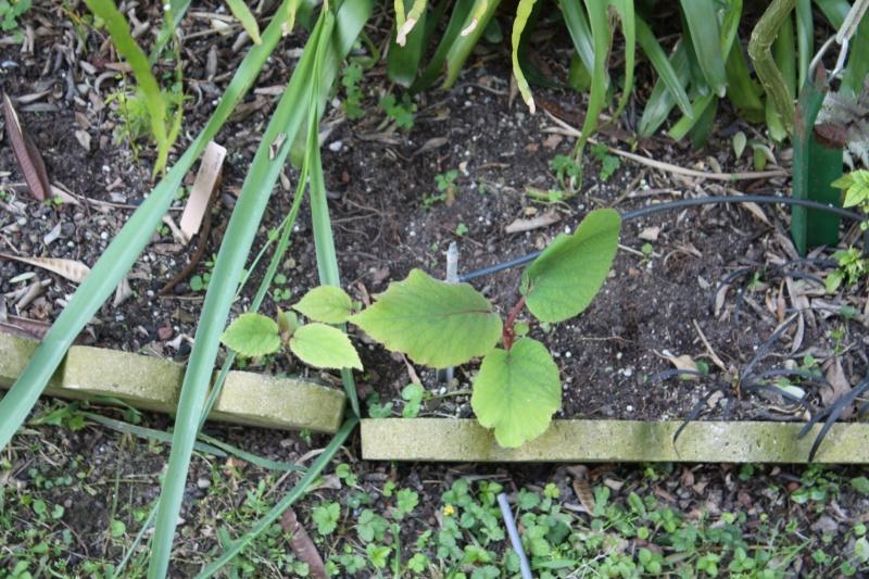 Spntanées marrantes de mon jardin Actini10