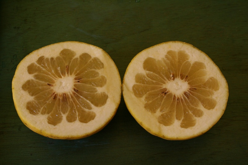 semis Citrus14