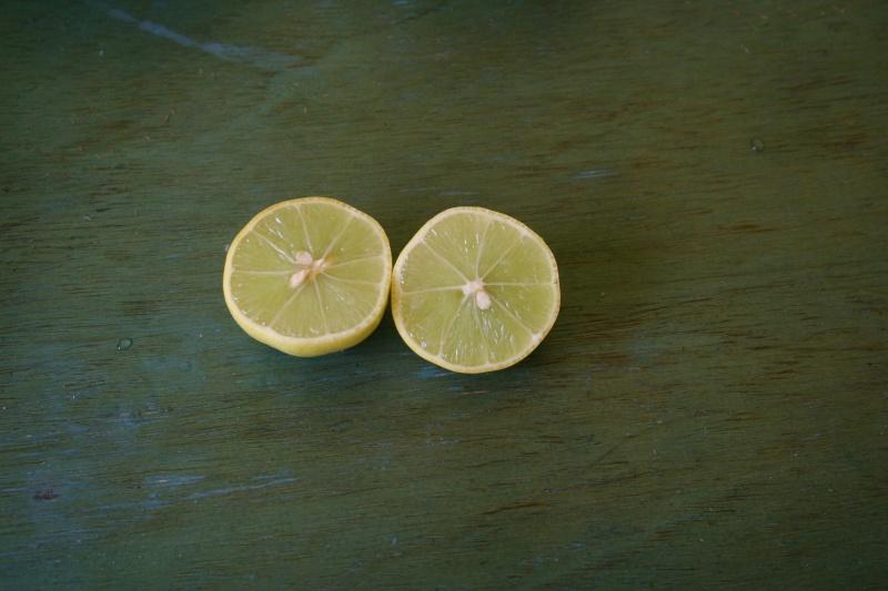 citrus latifolia et citrus aurantifolia Citrus18
