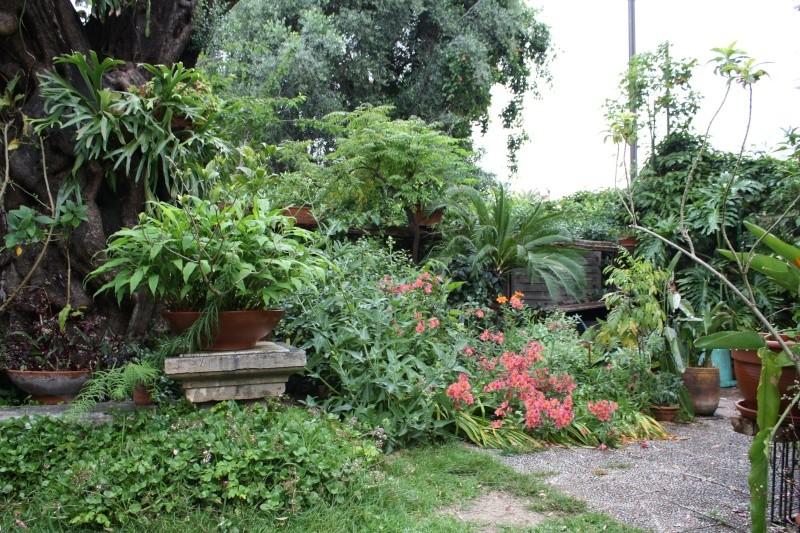 Mon jardin en ce moment : pas mal ! Fond_d10