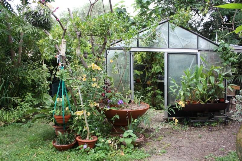 Mon jardin en ce moment : pas mal ! Nouvel10