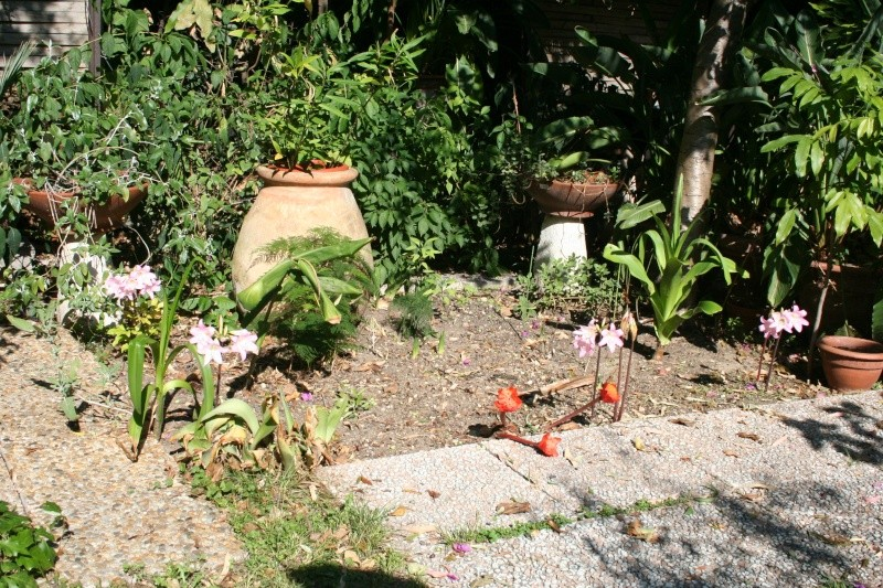 Mon jardin en ce moment : pas mal ! Plate_11