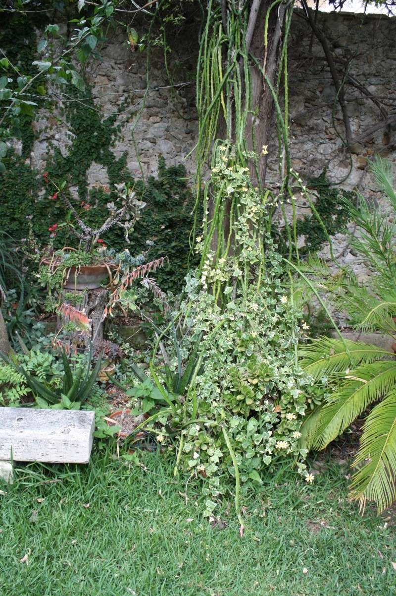 Mon jardin en ce moment : pas mal ! Sous_l10