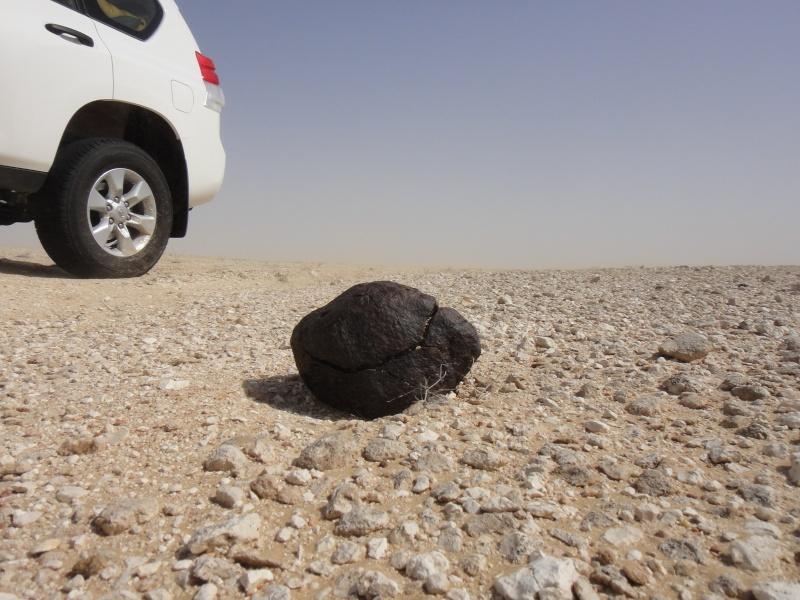 Expédition à Oman, avril-mai 2013 Pm010d10
