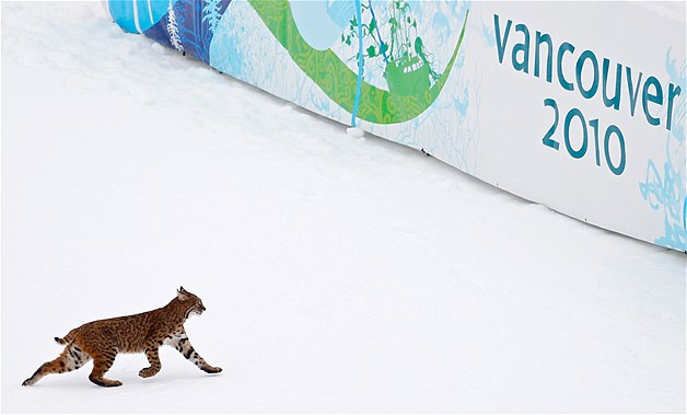 Sport et Animaux Imagec10