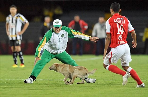 Sport et Animaux Imagec15