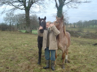 ULYSSE (Trait Breton) & UNIK (Breton X Percheron) nés en 2008 - adoptés en décembre 2008 par cherryhill Photos24