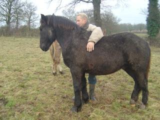 ULYSSE (Trait Breton) & UNIK (Breton X Percheron) nés en 2008 - adoptés en décembre 2008 par cherryhill Photos26