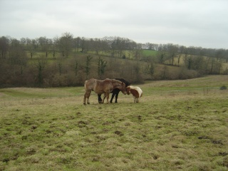 ULYSSE (Trait Breton) & UNIK (Breton X Percheron) nés en 2008 - adoptés en décembre 2008 par cherryhill - Page 2 Photos28