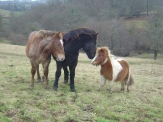 ULYSSE (Trait Breton) & UNIK (Breton X Percheron) nés en 2008 - adoptés en décembre 2008 par cherryhill - Page 2 Photos30