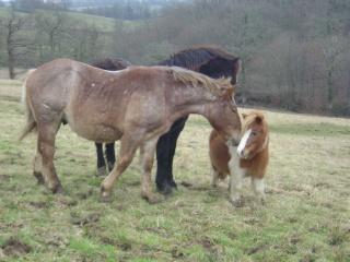 ULYSSE (Trait Breton) & UNIK (Breton X Percheron) nés en 2008 - adoptés en décembre 2008 par cherryhill - Page 2 Photos31