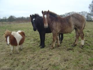 ULYSSE (Trait Breton) & UNIK (Breton X Percheron) nés en 2008 - adoptés en décembre 2008 par cherryhill - Page 2 Photos33