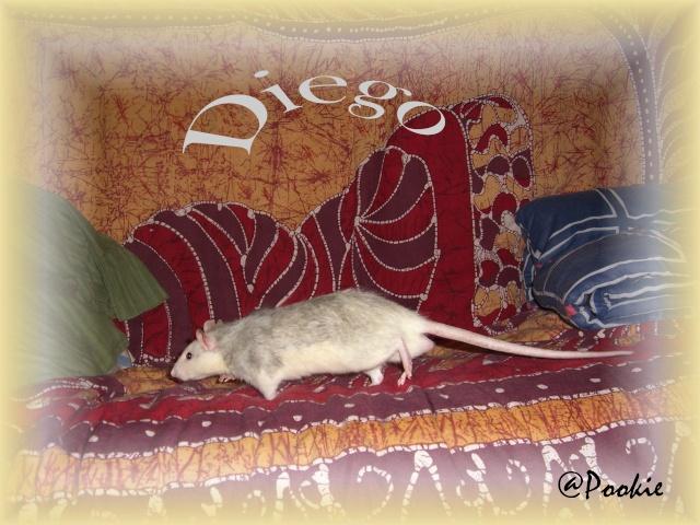 Omara x Diego ; husky x husky ;  (Grenoble 38) Cimg4710