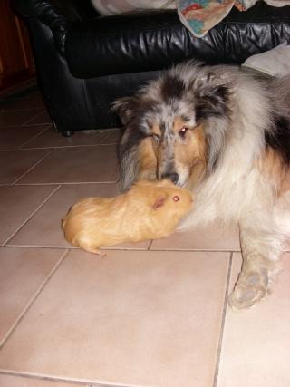 mes chats et mon cochon-d'inde Sn851513