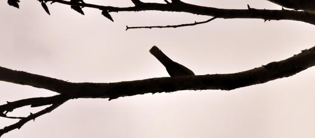 bizarre l'oiseau Dsc_0323