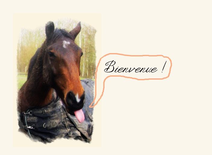 Cavaliers Provence Alpes Côtes d'Azur Sans_t17