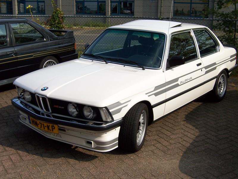 Rasso Hollandais 00281810