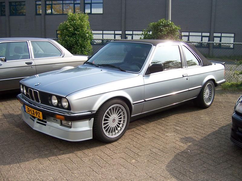 Rasso Hollandais 10027310