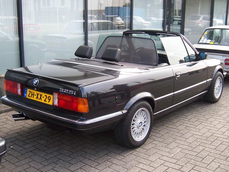 Rasso Hollandais 10027710