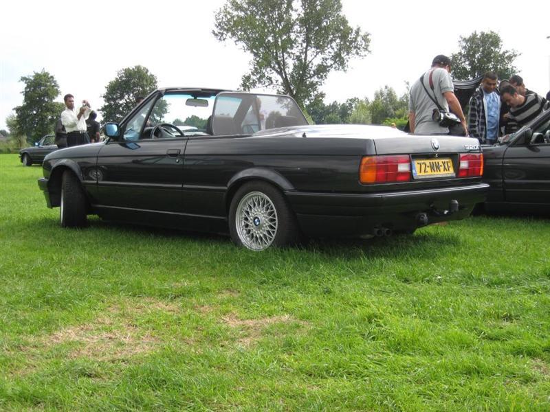 Rasso Hollandais Img00511