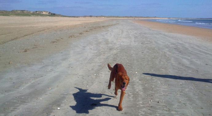 Photo de vos chiens à la plage! Dsc_0011