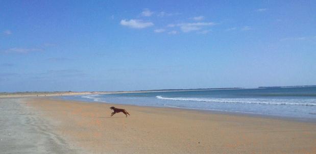 Photo de vos chiens à la plage! Dsc_0012