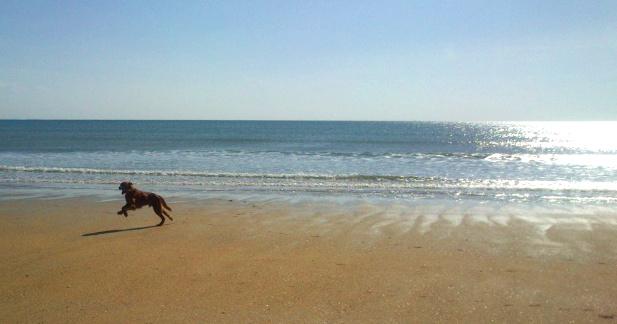 Photo de vos chiens à la plage! Dsc_0013