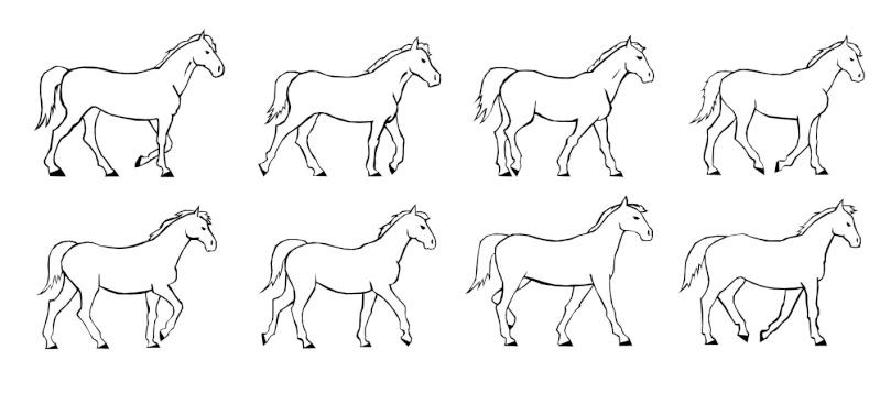 [Dessin] Les allures du cheval Le_pas10