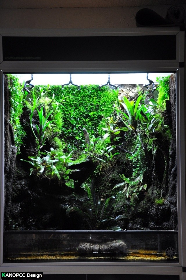 "Terrarium tropical humide by ""Le Pelu"" - Page 2 1b11"