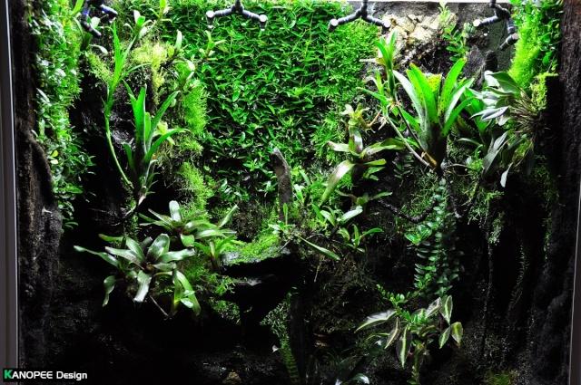"Terrarium tropical humide by ""Le Pelu"" - Page 2 2b10"