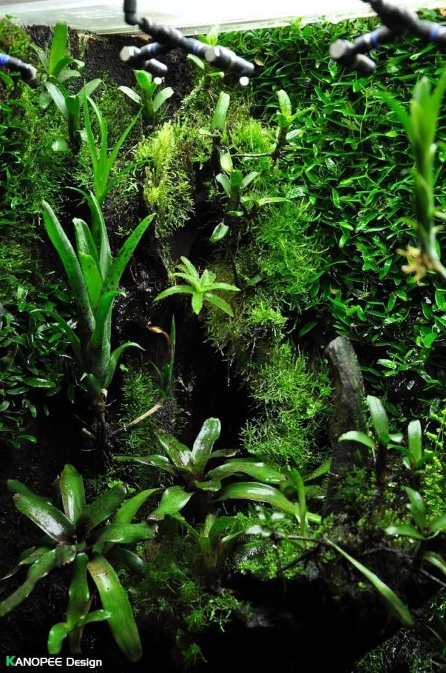 "Terrarium tropical humide by ""Le Pelu"" - Page 2 4b10"