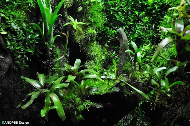 "Terrarium tropical humide by ""Le Pelu"" - Page 2 6b11"