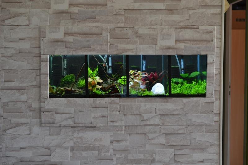 aquarium encastrer et cloisonner - Page 2 Dsc_0211