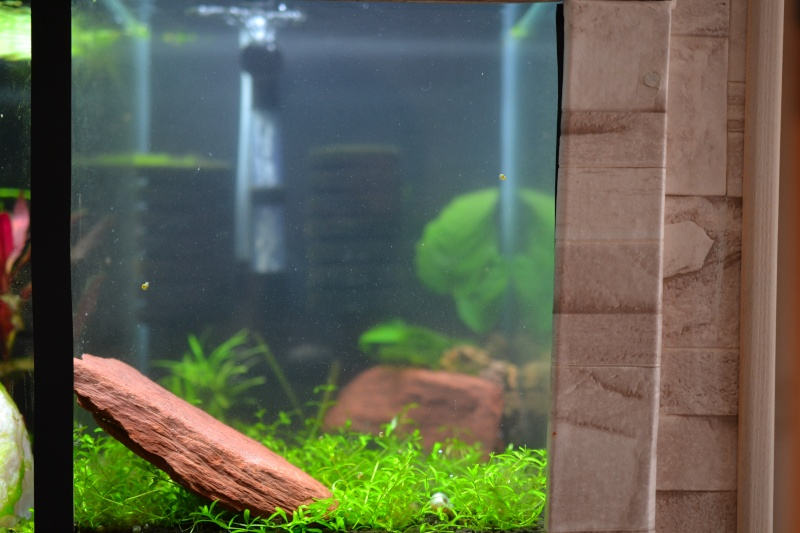aquarium encastrer et cloisonner - Page 3 Dsc_0410